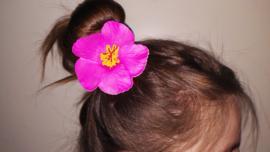 Geweldige Hibiscus Hawaïbloem 9 cm op clip fuchsia
