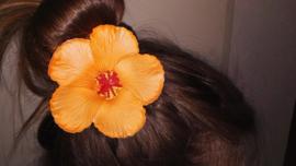 Geweldige Hibiscus Hawaïbloem 9 cm op clip oranje
