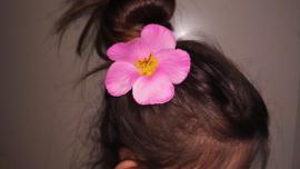 Geweldige Hibiscus Hawaïbloem 9 cm op clip roze