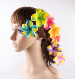 Vrolijke Plumeria Hawaïbloem 7 cm op clip kies je kleur