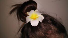 Superleuke Plumeria Hawaïbloem 8 cm op clip geel met wit