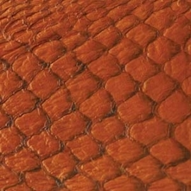 Fish Leather  glanzend citrus - 23 x 6,5 cm (FSGH-CT)
