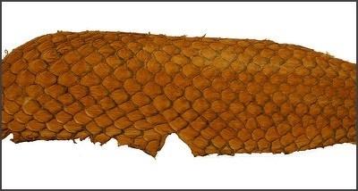 Fish leather - okergeel Suède +- 23 x 6,5 cm  (FSHM-YE)