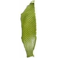Fish leather - glanzend Pistache. +- 23 x 6,5 cm  (FSHG-PS)