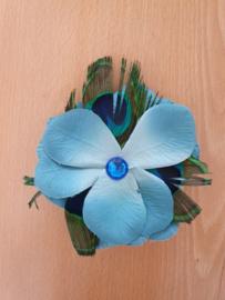 Blue Peacock Flower.