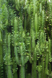 Esta Greenhouse  Tropische Jungle cactus wand  poster XXL groen 158830
