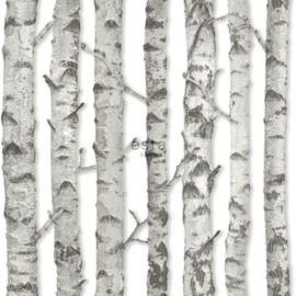 Esta Greenhouse  Berken boomstammen  licht warm grijs 138889