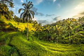Bali Tropisch Landschap 01