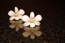 413 Dutch DigiWalls Fotobehang 70069 Orchidee