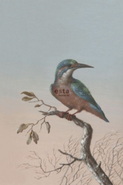 Esta Home Blush PhotowallXL Kingfisher 158888