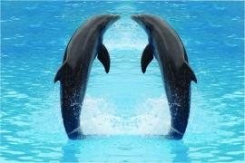 501 Dutch DigiWalls Fotobehang 70009 Dolfijnen
