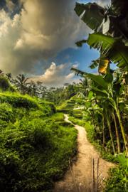Bali Tropisch Landschap 04