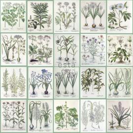 Esta Home Wallpaper XXL BOTANISCHE BLOEMEN 158826