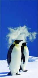 503 Dutch DigiWalls Fotobehang 70026 Pinguins