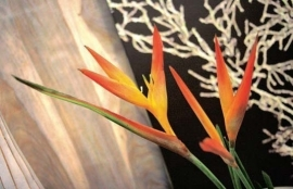 Dutch DigiWalls One - art. 1044 Strelitzia