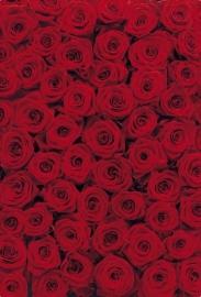 12. Komar Fotobehang Roses 4-077
