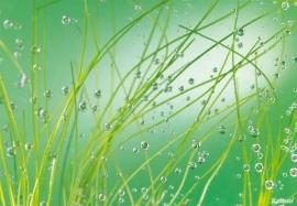 46. Komar Fotobehang Water in het gras 8-889