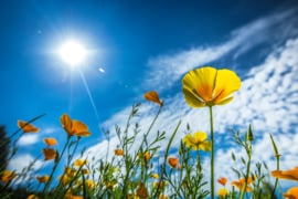 Bloemenpracht met heldere blauwe lucht