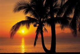 23. Komar Fotobehang Palmy Beach Sunrise 8-255