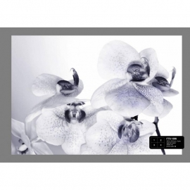 Dutch Wallcoverings Fotobehang Orchideeën