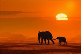 101 Dutch DigiWalls Fotobehang 70001 Olifanten bij zonsondergang