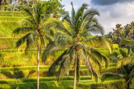 Bali Tropisch Landschap 02