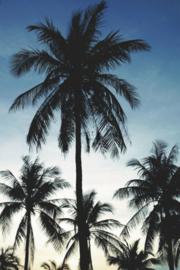 Esta Home PhotowallXL Palms 158849