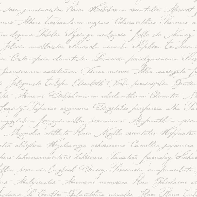 031. Esta Home Handgeschreven latijnse bloemennamen zilver 128031