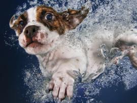 TFF 3D Image Puzzel - Underwaterdogs Popcicle - 100 stukjes