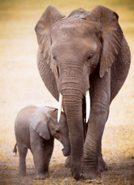 Eurographics 0270 - Elephant & Baby - 1000 stukjes