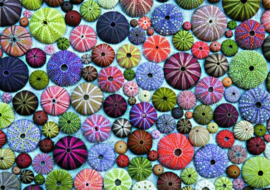 Piatnik - Gekleurde Zee Egels - 1000 stukjes