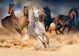 KS - Wild Horses - 1000 stukjes