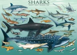 Eurographics 0079 - Sharks - 1000 stukjes