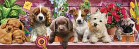 KS - Puppies - 1000 stukjes  Panorama