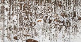SunsOut 74415 - Woodland Encounter - 1000 stukjes  Panorama