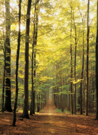Eurographics 3846 - Forest Path - 1000 stukjes