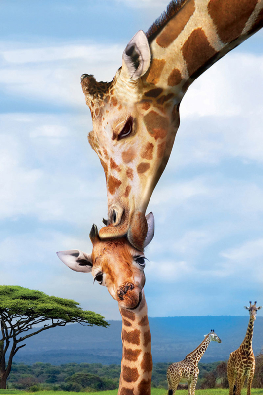 Eurographics 0294 - Giraffes - 250 stukjes