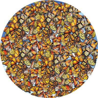 SunsOut 35047 - Monarch Frenzy - 1000 stukjes