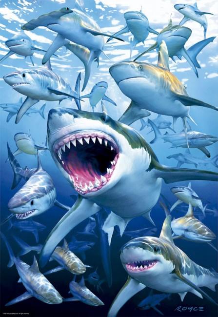 Educa - Shark Club - 500 stukjes