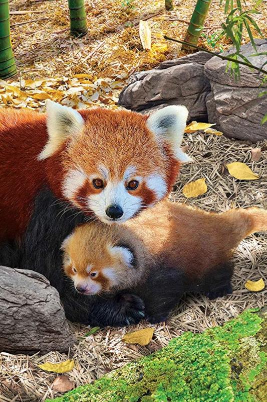 Eurographics 5557 - Red Pandas - 250XL stukjes