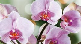 Orchidee va 10ml