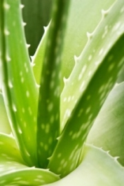 Aloevera 10voud  .va 10ml INCI:Aqua, Aloe Barbadensis Gel, Citric Acid, Sodium Benzoate, Potassium Sorbate.