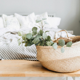 Eucalyptus and Cotton BB 4219