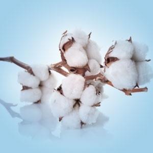 Clean Cotton  Bestseller