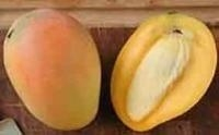 Mangobutter va 100gr INCI: Mangifera Indica(Mango) Seed Butter