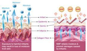 Natural Moisturizer Factor N.M.F.  10ml