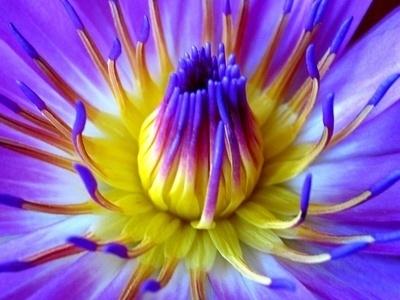 Flowerbom Een Bestseller