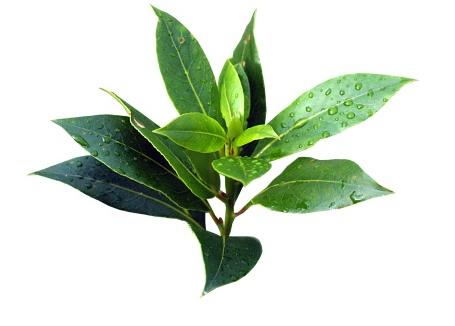 Tea-tree  INCI Melaleuca  alternifolia australie10ml