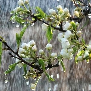 China Rain BESTSELLER
