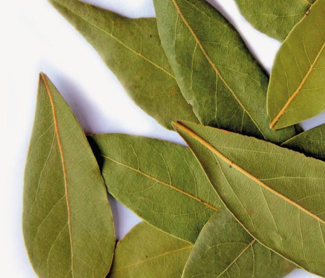 Laurierbes  10ml INCI-naam Laurus nobilis (Bay) blad olie ( biologisch)